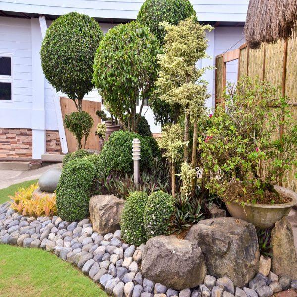 rocks garden Little Jungle